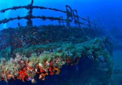 Agenzia/operatore Turistico Posidonia Blu Diving Center